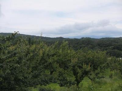 果樹団地.JPG
